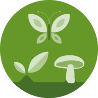 plant-fungi-insect