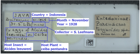 example-slide