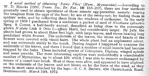 Novel method of obtaining Fairy Flies