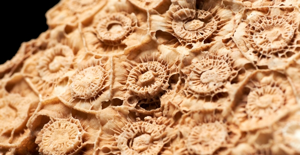 A brief summer break for the microscopic Foraminifera | Notes from